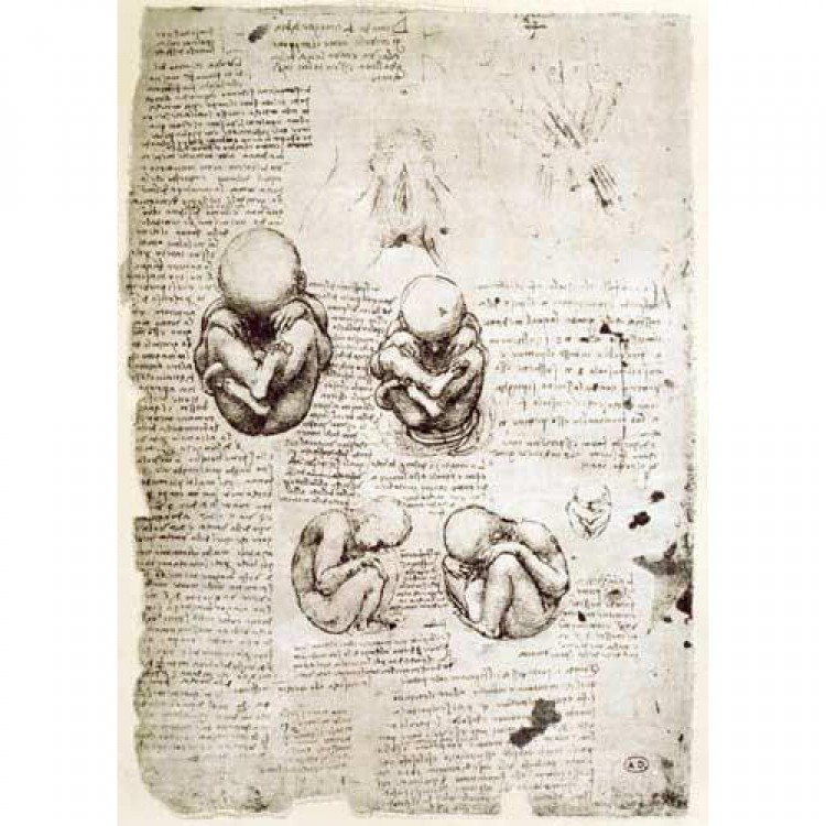 Schilderij Five Views of a Foetus in the Womb, facsimile foto 1